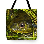 Chilean Widemouth Frog Tote Bag