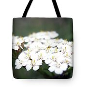 Close-ups Of A White Meadow Flower Tote Bag