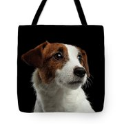 Closeup Portrait Of Jack Russell Terrier Dog On Black Tote Bag