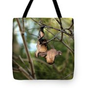 Coffee Brown Pods Tote Bag