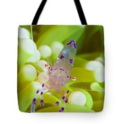 Commensal Shrimp On Green Anemone Tote Bag by Steve Jones