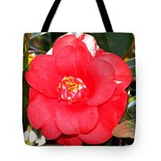 Coral Camellia At Pilgrim Place In Claremont-california  Tote Bag