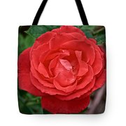 Coral Rose At Pilgrim Place In Claremont-california Tote Bag