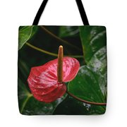 Corazon Chino Tote Bag