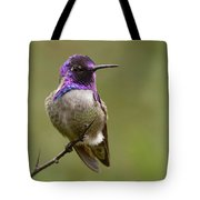 Costa's Hummingbird, Solano County California Tote Bag