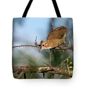 Crested Hornero Tote Bag