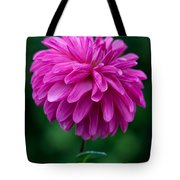 Dahlia Field Tote Bag