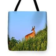 Deer Buck. Tote Bag