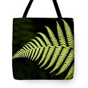 Detail Of Asian Rain Forest Ferns Tote Bag