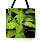Diviners Sage Tote Bag