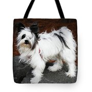Dog At The Port Of Olympia Tote Bag