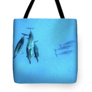 Dolphins At Rest Tote Bag