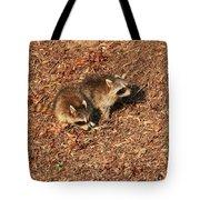 Green Heron Babies Tote Bag