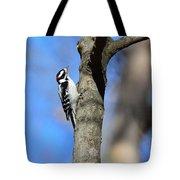 Downy Woodpecker Tote Bag