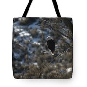 Eagle In Tree Tote Bag