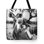 East Africa: Kudu Tote Bag