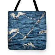 Elegant Terns Diving For Fish Tote Bag