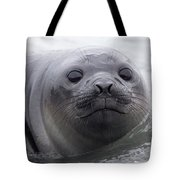 Elephant Seal Pup Tote Bag
