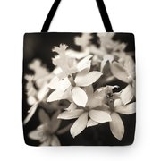 Epidendrum Orchid Tote Bag