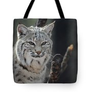 Face Of A Canadian Lynx Tote Bag