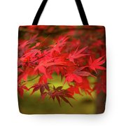 Fall Color Maple Leaves At The Forest In Aomori, Japan Tote Bag