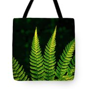 Fern Close-up Nature Patterns Tote Bag