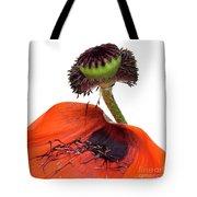 Flower Poppy In Studio Tote Bag
