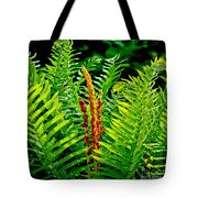 Fern Fractals In Nature Tote Bag