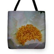 Franklin Tree Flower 1 Tote Bag