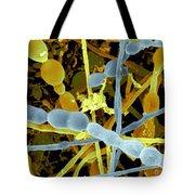 Fungal Contamination Of Plastic Tubing Tote Bag