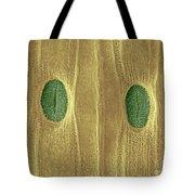 Garlic Leaf Stomata, Esem Tote Bag