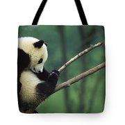 Giant Panda Ailuropoda Melanoleuca Year Tote Bag