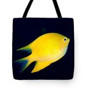 Golden Damselfish Tote Bag