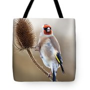 Goldfinch On Teasle Tote Bag
