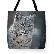 Gorgeous Bobcat's Face Up Close Tote Bag
