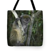 Gray Bamboo Lemur Tote Bag