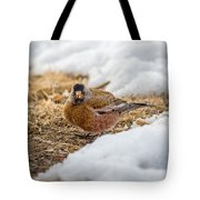 Gray Capped Rosy Finch In The Snow Tote Bag