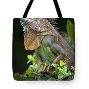 Green Iguana Iguana Iguana, Sarapiqui Tote Bag