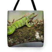 Green Iguana Iguana Iguana, Tarcoles Tote Bag