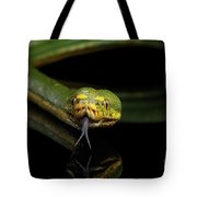 Green Tree Python. Morelia Viridis. Isolated Black Background Tote Bag by Sergey Taran