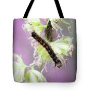 Gypsy Moth Caterpillar Tote Bag