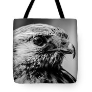 Harris Hawk   Tote Bag