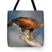 Harris's Hawk On Watch Tote Bag