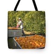 Harvesting Navel Oranges Tote Bag
