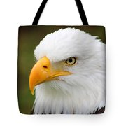 Head Of An American Bald Eagle Tote Bag
