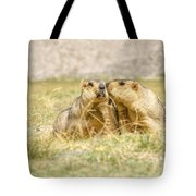 Himalayan Marmots Pair Kissing In Open Grassland Ladakh India Tote Bag