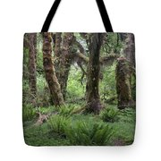 Hoh Rain Forest 3371 Tote Bag