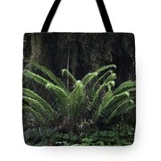 Hoh Rain Forest 3392 Tote Bag