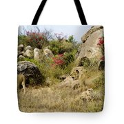 Hunting Lionesses Tote Bag