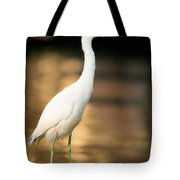 Immature Little Blue Heron Tote Bag